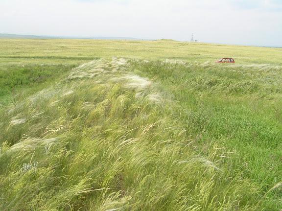 Древний Великий Русский оборонительный вал. Другой угол основания квадратной крепости. Вдали видны Древние курганы.